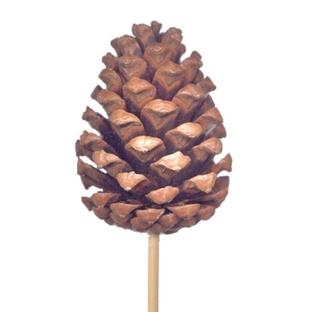 Pine cone on stem 'natural'