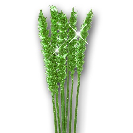 Wheat 'green green glitter' Triticim