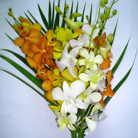 Mixed Orchids + 1