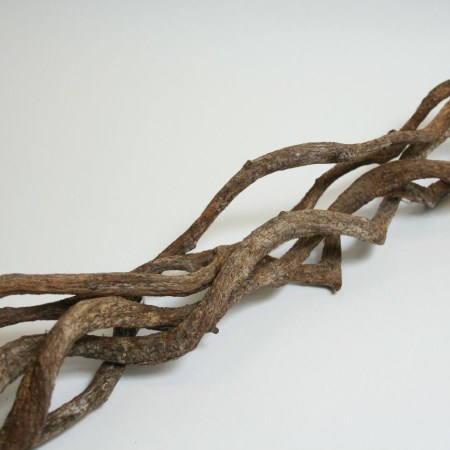 Curly Vine 'Natural' 100cm