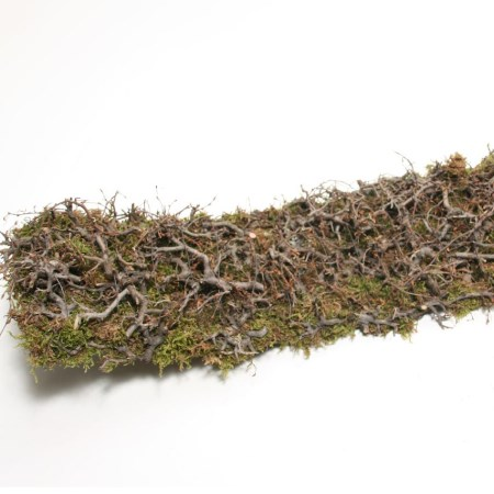 Wild Bonsaimoss Bowl 'Natural' 60cm