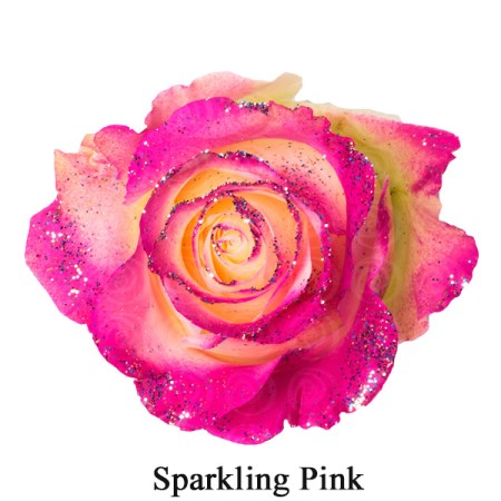 Rose 'Tinted sparkling Pink' Rosa