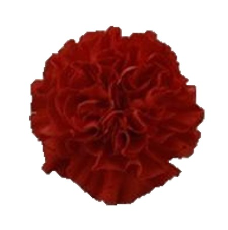 Carnation 'America' Dianthus