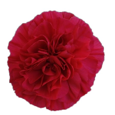 Carnation 'Mandalay' Dianthus