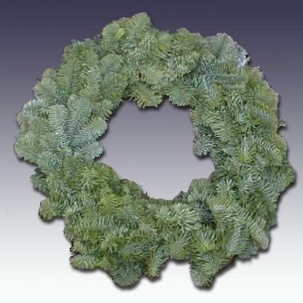 Noble Fir Wreath Abies nobilis